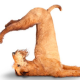 Dog doing a yoga pose. In this post you can find out how your words and behavior either reinforce or damage your personal brand.
